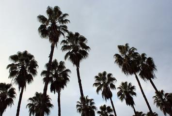Nice palm trees scene