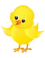 Chick illustration on white