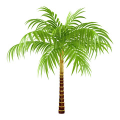 decorative palm