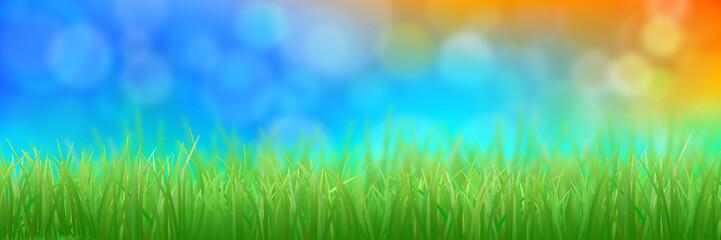 Natural background. Green grass. Bokeh.