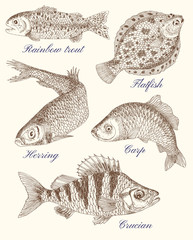 Design graphic set with drawings of fish and text
