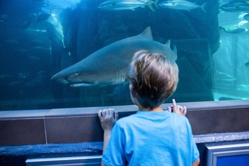 Young man looking at shark in a tank