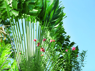 Palm leaves and blue sky, in resort