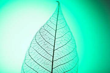 Keuken foto achterwand Decoratief nervenblad Skeleton leaf on green background, close up