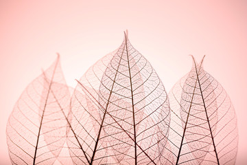 Zelfklevend Fotobehang Decoratief nervenblad Skeleton leaves on pink background, close up