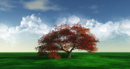Maple Tree landscape widescreen