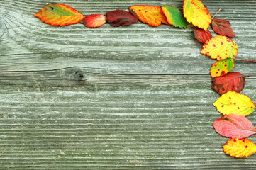 Board with autumn leaves concept