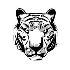 Head of Tiger