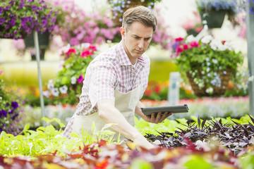 Caucasian man working in plant nursery