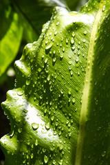 rain drop on gren leaf