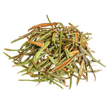 Marsh (Northern) Labrador Tea (Ledum palustre) isolated on white