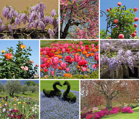 flowering spring garden collage