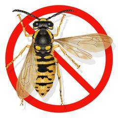 vespula austriaca, wasp