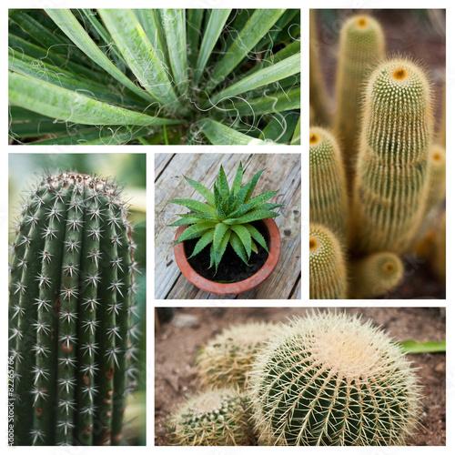 composition cactus fotos de archivo e im genes libres de. Black Bedroom Furniture Sets. Home Design Ideas
