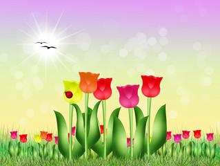 tulips field in spring
