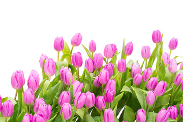 Wall Mural - tulip isolated