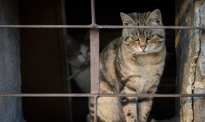Scared cats behind bars