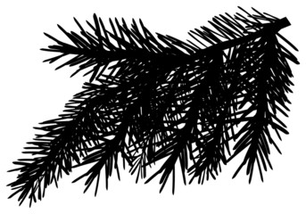 black pine branch with lot of needles