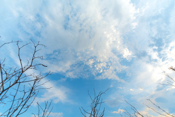 Fototapete - clouds in the blue sky
