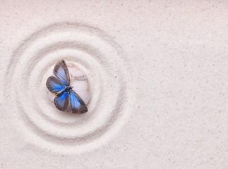Obraz A blue vivid butterfly on a zen stone with circle patterns in th - fototapety do salonu