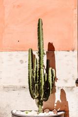 cactus near wall