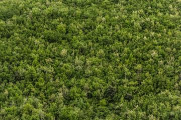 alberi bosco in collina