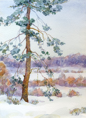 Watercolor landscape. Pine tree in the winter steppe