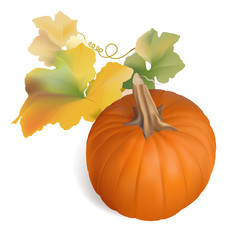 Pumpkin with colorful leaves for Thanksgiving or Autumn designs