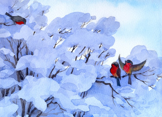 Watercolor winter scene. Bullfinch sitting on a snow-covered bra