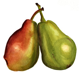 A pair of watercolor pears on white background