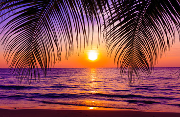Beautiful sunset.  Sunset over the ocean with tropical palm tree