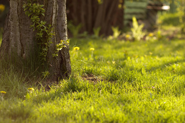 Wiosenna trawa - fototapety na wymiar