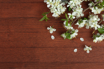 Spring cherry blossoms on a wooden background