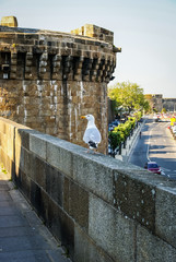 Seagull walking on the parapet in Saint-Malo, France