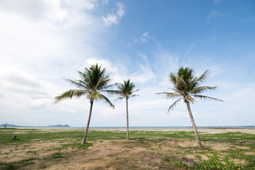 An image of three nice palm trees in the blue sky with some clou