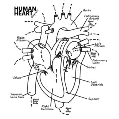 Human heart diagram anatomy tattoo