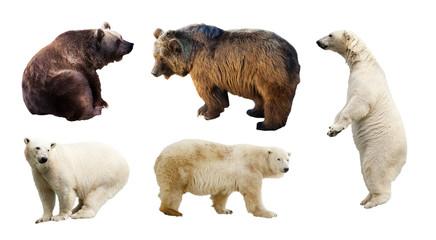 Wall Mural - Set of bears