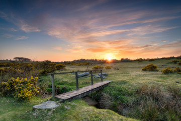Wall Mural - A Wooden Bridge on the Moor