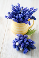 grape hyacinth flowers in a pitcher
