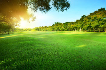 beautiful morning sun shining light in public park with green gr