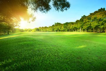 beautiful morning sun shining light in public park with green gr Fototapete