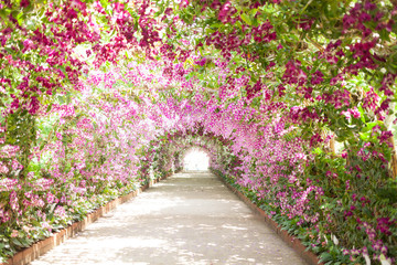 footpath in a botanical garden with orchids lining the path Wall mural