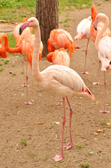 pink flamingo zoo