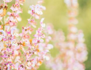 Spring flower blur background sage pink