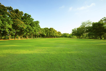 Poster Culture beautiful morning light in public park with green grass field an