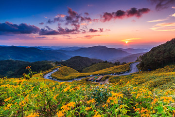 Mexican sunflower called Tung Bua Tong and sunset, Thailand
