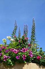 Blumendekoration vor Himmelblau