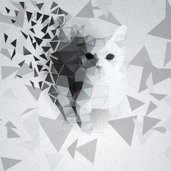 Cat of the polygons on the chaotic background
