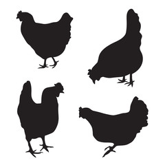 silhouettes of chickens