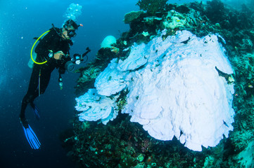 scuba diving diver kapoposang indonesia bleaching underwater